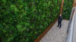 dekoratyvinė sienelė, dirbtinė žolė, dirbtiniai augalai, Hilton