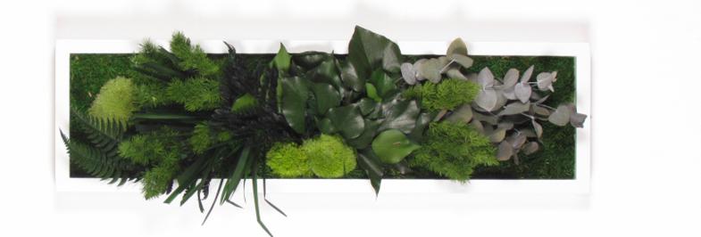 Samanu ir stabilizuotu augalu sienos-785