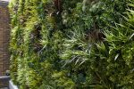 dekoratyvinė sienelė, dirbtinė žolė, dirbtiniai augalai, namų aplinka