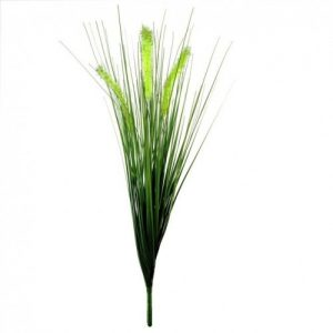 dekoratyviniai augalai, šilkinės smilgos