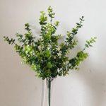 dekoratyviniai medžiai, dekoratyviniai augalai