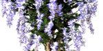 dirbtinės gėlės, dekoratyviniai augalai